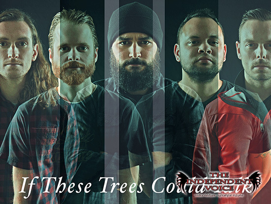 if-these-trees-could-talk